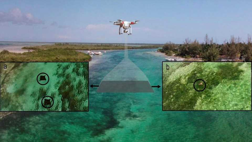 Off-the-Shelf Drones Are Being Used by Bio-Researchers to Accurately Track Aquatic Life
