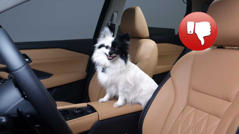 Your Dog Needs To Buckle Up. Here's Why
