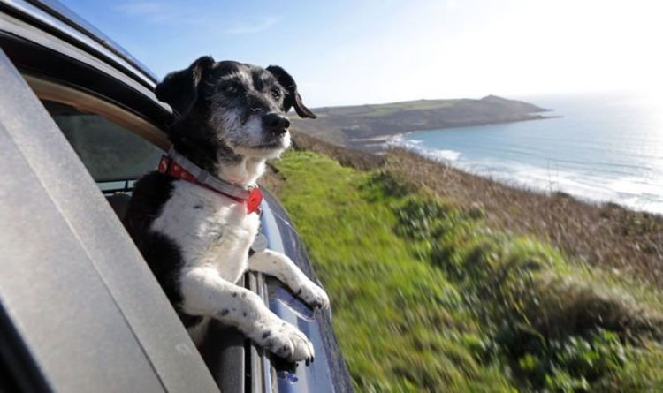 Drivers treated as 'cash cows' when travelling with pets due to new post-Brexit rule