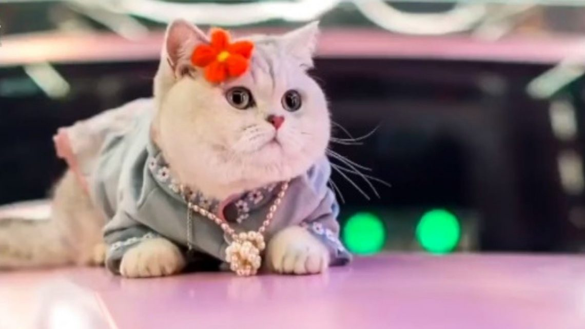 This Cat Model Made Cars Its Catwalk, Literally